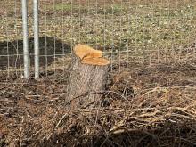 Nur noch ein Baumstumpf